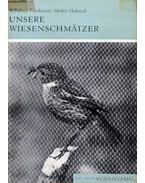 Unsere Wiesenschmätzer (Kerti madaraink)