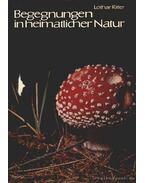 Begenungen in heimatlicher natur II (Találkozás a hazai természettel II)