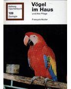 Vögel im Haus und ihre Pflege