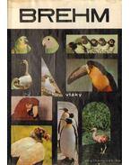 Brehm 3