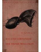 Bau und Lebensweise der Tiefsee-Mollusken (A vámpír tintahal testfelépítése és életmódja)