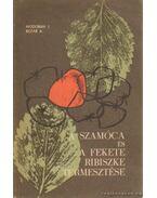 A szamóca és a fekete ribeszke termesztése