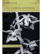 Epipactis und Cephalanthera (A nőszőfű és madársisak)
