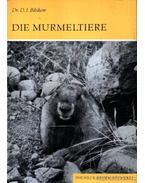 Die Murmeltiere (A mormoták)