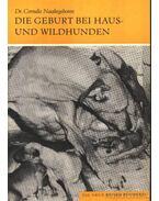 Die Geburt bei Haus- und Wildhunden (A házi és a vadonélő kutya születése)
