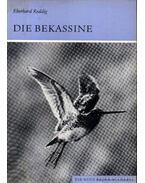 Die Bekassine (A sárszalonka)