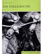 Die Tollkirsche (A nadragulya)