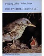 Die Wacholderdrossel (A fenyőrigó)