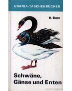 Schwane, Ganse und Enten