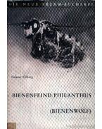 Bienenfeind Philanthus (Bienenwolf)