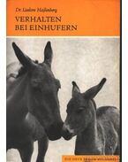 Verhalten bei Einhufern (Egypatások tartása)