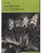 Orchis und Dactylorhiza (Orchis és a hússzínű ujjasbokor) 1983