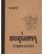 A burgonya termesztése