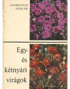 Egy- és kétnyári virágok