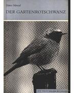 Der Gartenrotschwanz (A kerti rozsdafarkú)
