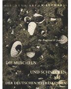 Die Muscheln und Schnecken (Kagylók és csigák)