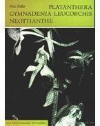 Platanthera, Gymnadenia, Leucorchis, Neottianthe (Sarkvirág, Bibircsvirág, Kis fehér orchidea)
