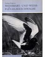 Weissbart- und Weissflügelseeschwalbe