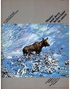 Moose and deer behaviour in snow (A jávorszarvas és a szarvas téli élete)