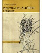 Beschalte Amöben /Testaceae/ (A házas amőba)