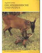 Die Spiesshirsche und Pudus (A nyársas- és puduszarvasok)