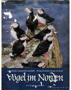 Vögel im Norden