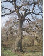 Magyarország legnagyobb fái