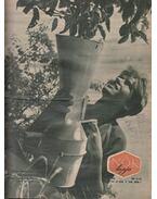 Nők lapja 1962. 27-52. szám (II. félév)
