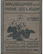 Unsere Waldblumen und Farngewachse