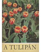 A tulipán - Sipos Elek
