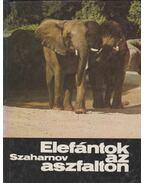 Elefántok az aszfalton - Szaharnov Szvjatoszlav