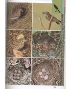 Szárazföldi madarak
