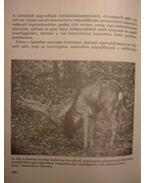 A vadállomány fenntartásának lehetőségei
