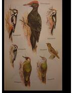 Geschützte und jagdbare Vögel