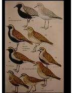 Wir bestimmen Die Vögel Europas