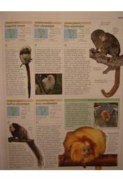 Állatok - Régikönyvek