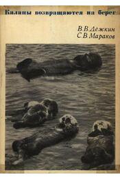 A tengeri vidrák visszatérnek a partra (Каналы возвращаются на берег) - Régikönyvek