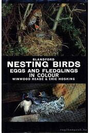 Nesting birds (Fészkelő madarak) - Régikönyvek
