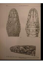 Hüllők - Reptilia - Régikönyvek