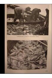 Halászat - Régikönyvek