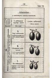 Oenologia azaz: irányt adó kalauz - Régikönyvek