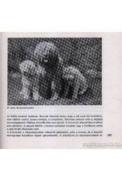 A kutya tenyésztése, tartása, kiképzése - Régikönyvek