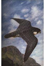 Birds of Prey - Régikönyvek