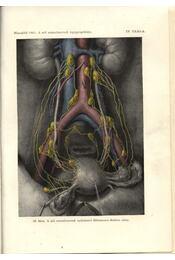 A nőgyógyászat kézikönyve I-II. - Régikönyvek