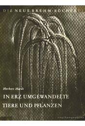 In Erz Umgewandelte Tiere und Pflanzen - Régikönyvek