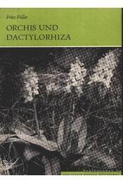 Orhis und Dactylorhiza (Orchis és a hússzínű ujjasbokor) 1972 - Régikönyvek