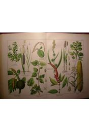 Naturgeschichte des Pflanzenreichs nach dem Linné'schen system - Régikönyvek