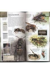 Rovarok és pókok - Régikönyvek