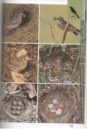 Szárazföldi madarak - Régikönyvek
