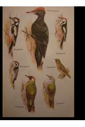 Geschützte und jagdbare Vögel - Régikönyvek